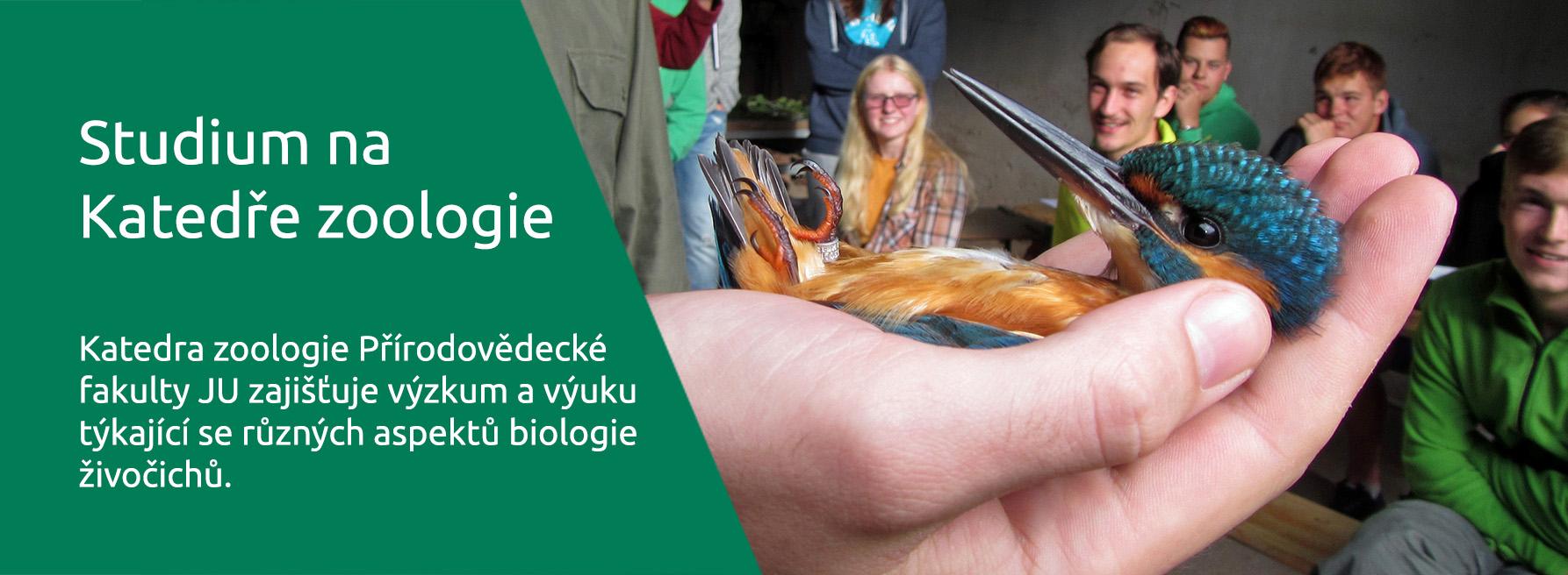 Studium Na Katedře Zoologie