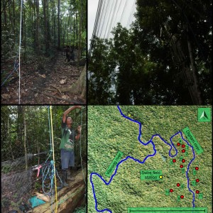 Vertical Stratification Of An Avian Community In New Guinean Tro