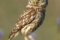 V Budějovicích žije Sto Druhů Ptáků, úplně Ale Vymizeli Sýčci