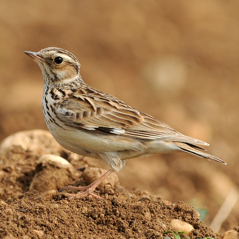 Ekologie A Etologie Ptáků