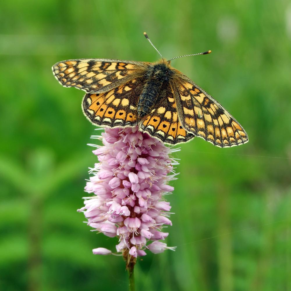 Ekologie A Biogeografie Motýlů