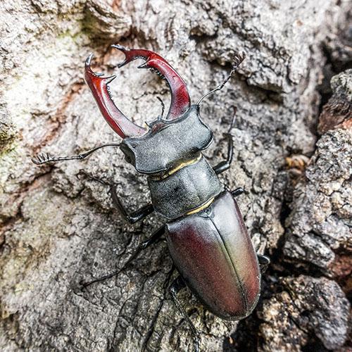 Ekologie Hmyzu V Lesních Ekosystémech