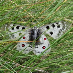 Terénní Kurz Alpské Zoologie 2017