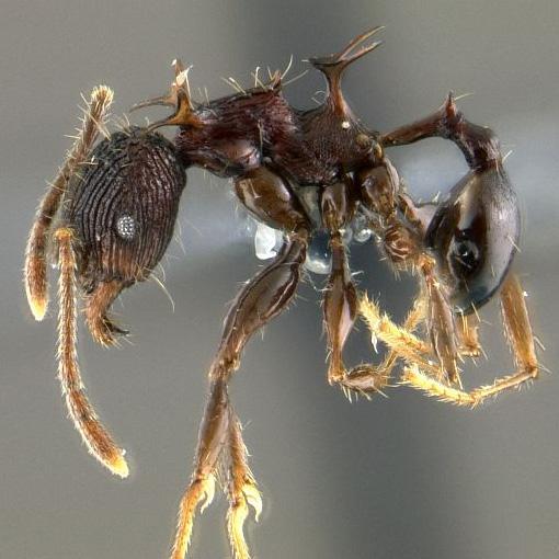 Ekologie A Evoluce Sociálního Hmyzu