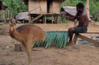 The Predictors Of The Social Status Among Traditional Societies Of Papua New Guinea