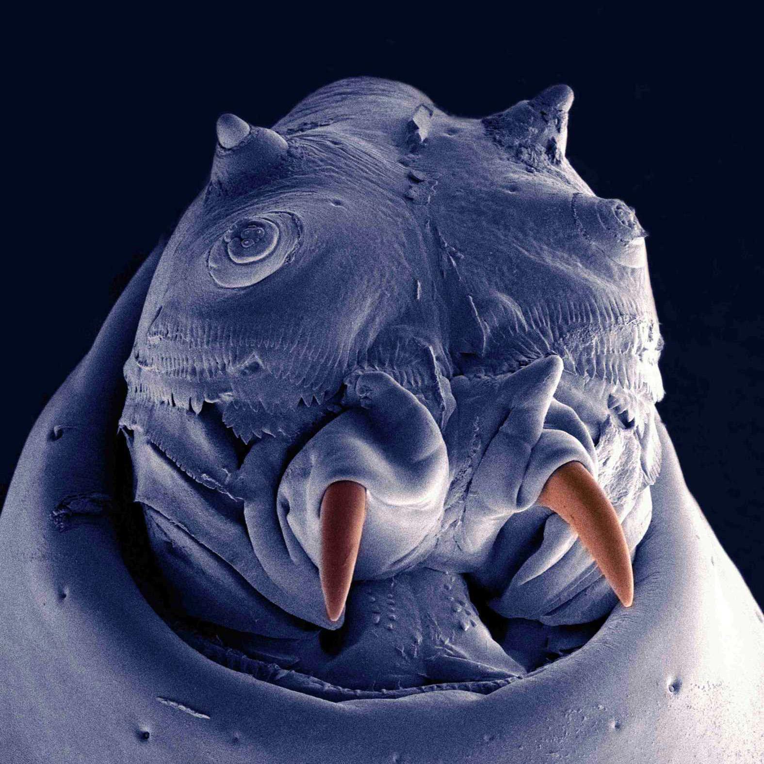 Ekofyziologie Zimního Spánku Hmyzu