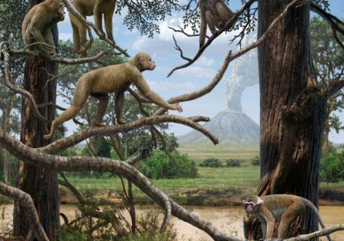 Evoluce A Fylogeneze Lidoopů A člověka