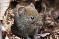 Changes Of Small Mammal Communities In Landscapes Of Central Europe