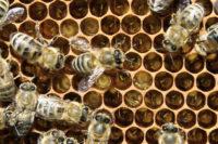 Pozvánka Na II. Ročník Mezinárodní Včelařské Konference