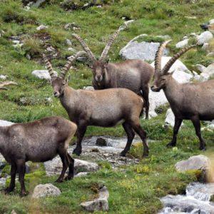 Terénní Kurz Alpské Zoologie 2018