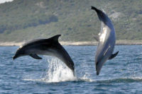 Opportunity To Participate In Wild Bottlenose Dolphin Research