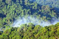 Společenstva Býložravců Na Sukcesním Gradientu V Tropickém Horském Lese