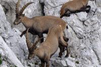 Terénní Kurz Alpské Zoologie 2019