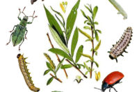PhD Position: Insect-plants Interactions