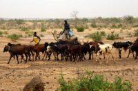Způsob života Podmiňuje Genetickou Strukturu Lidských Populací V Africkém Sahelu