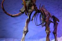 Jak Vymírali Velcí A Malí Savci Na Konci Pleistocénu?