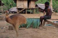 Společenské Postavení Mužů V Tradiční Společnosti Na Papui-Nové Guinei