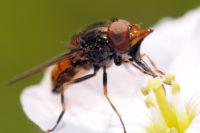 Jaký Je Evoluční Význam Květní Ostruhy?