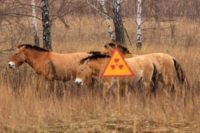Seminar: Fauna Of Chernobyl Exclusion Zone